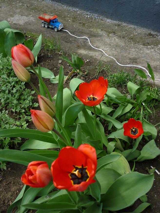 4-17-2010 4-55-43 PM_0046